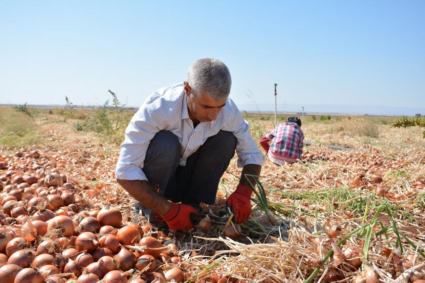 """BM Genel Kurulu, 2021 yılını """"Uluslararası meyve ve sebze yılı"""" ilan etti"""