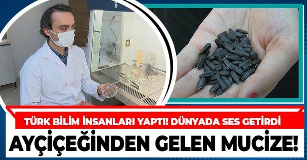 Türk bilim insanları geliştirdi! Ayçiçeği tohumu tüm dünyada ses getirdi!