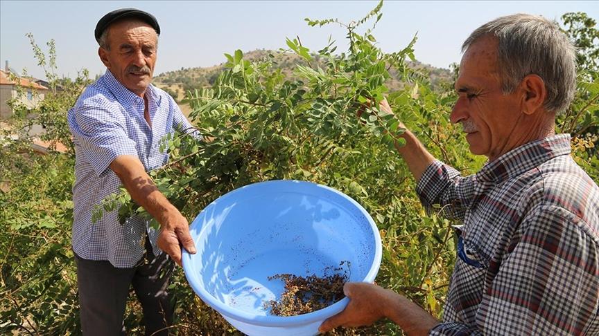 Türkiye'de sumak üretimi 8 yılda 5 kattan fazla arttın fazla arttı