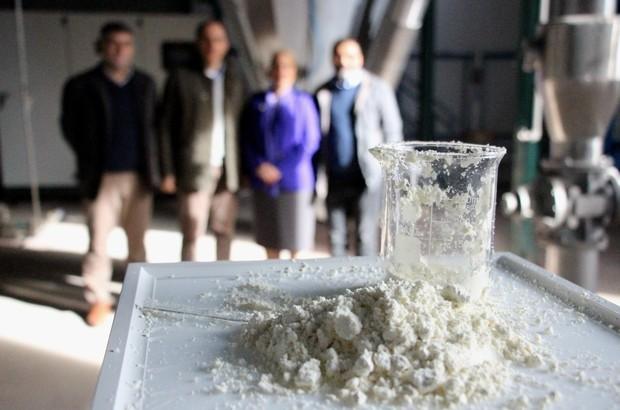 Türkiye'nin ilk 'yerli ağız sütü tozu' üretildi. Buzağı ölümlerini engelleyecek proje ilk üretim yapıldı!