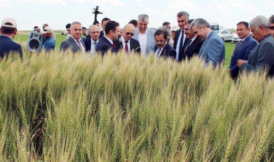 Yerli tohumlar tanıtıldı